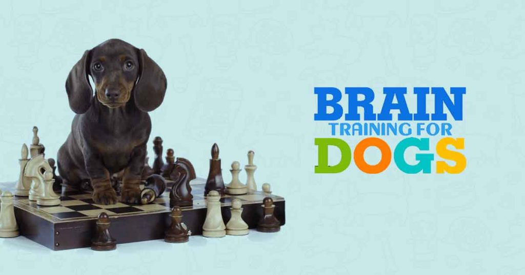 Brian Training for Dogs