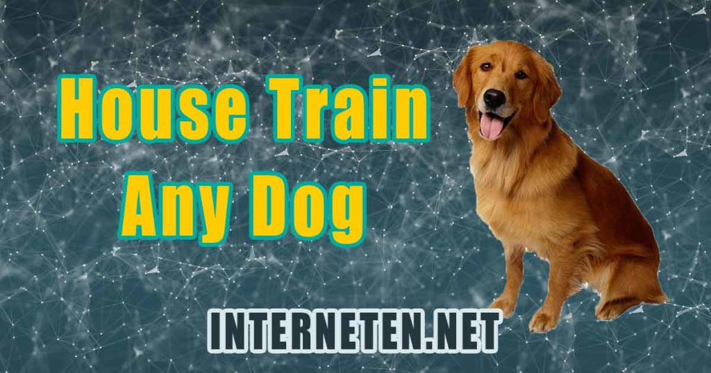 How To Housetrain & Potty Train Any Dog